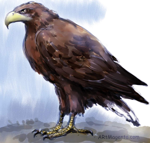 White-tailed Eagle is a bird sketch by artist and illustrator Artmagenta