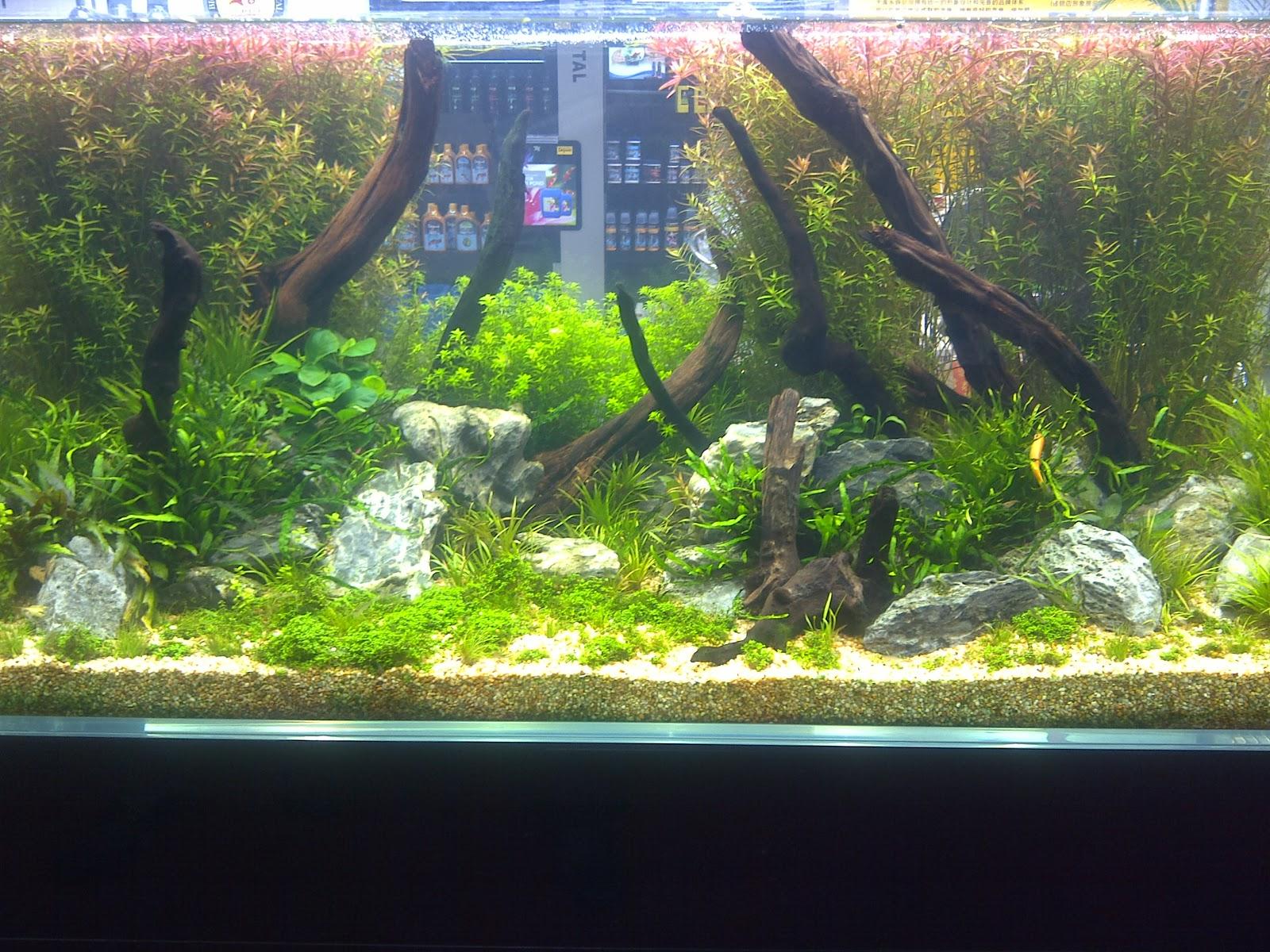 """Rumah"""" ikan paling menakjubkan di dunia ~ waterdecor splashnews ..."""