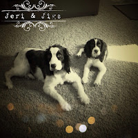 Meet Jeri Springer and Jigs