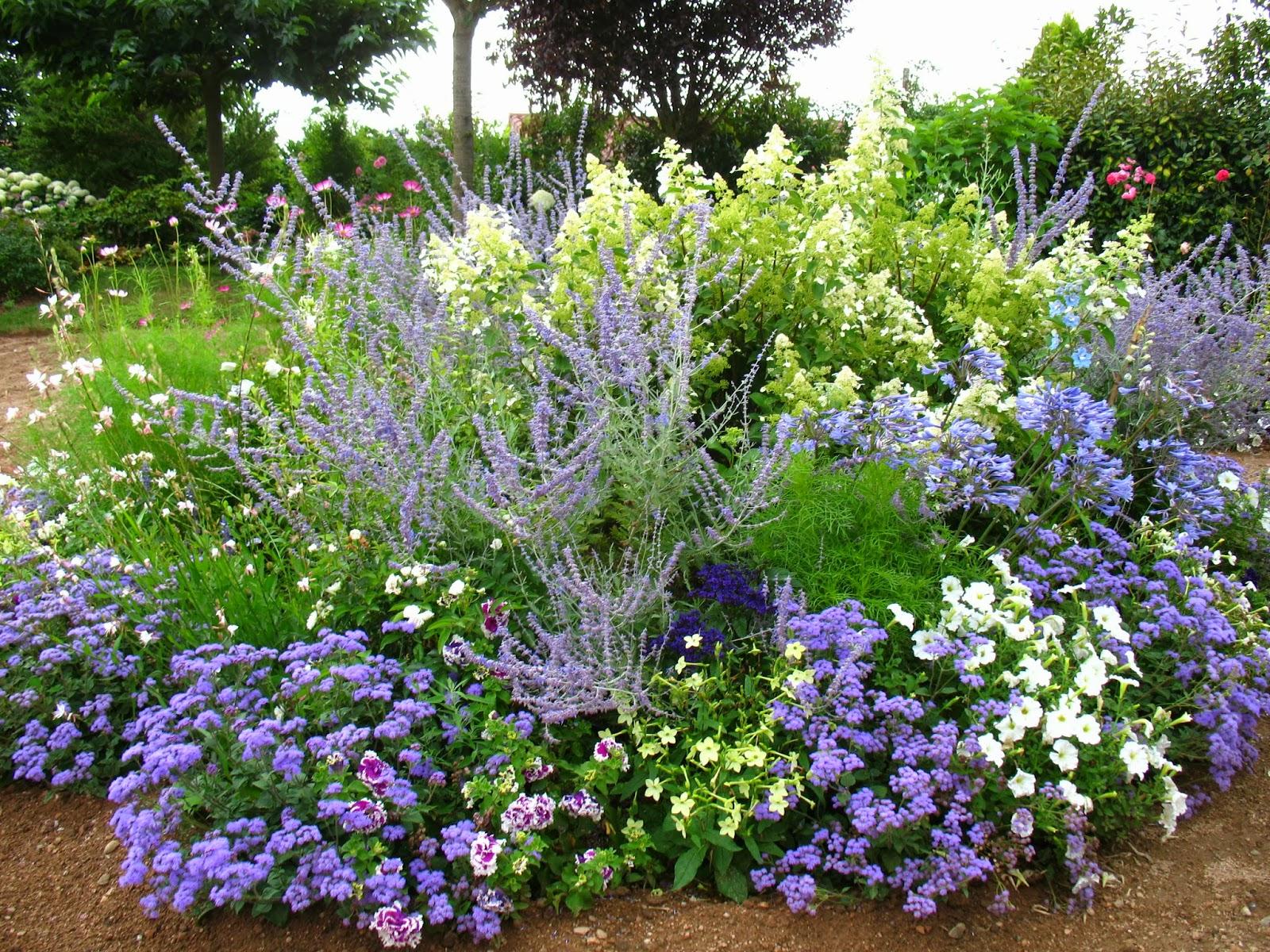 Roses du jardin ch neland h liotrope marine for Plantes vivaces pour jardin anglais