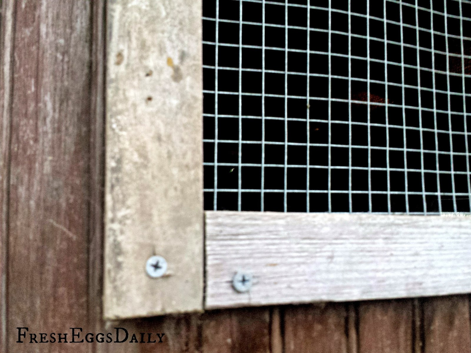Chicken Coop Predator Proofing 101: How to Keep your Chickens Safe ...