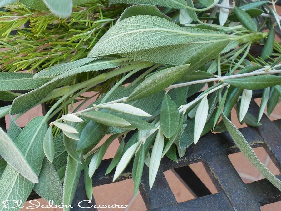 el jabon casero plantas aromáticas frescas