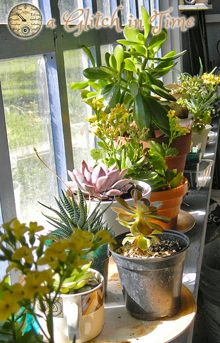 A collection of succulents in the Garden House.