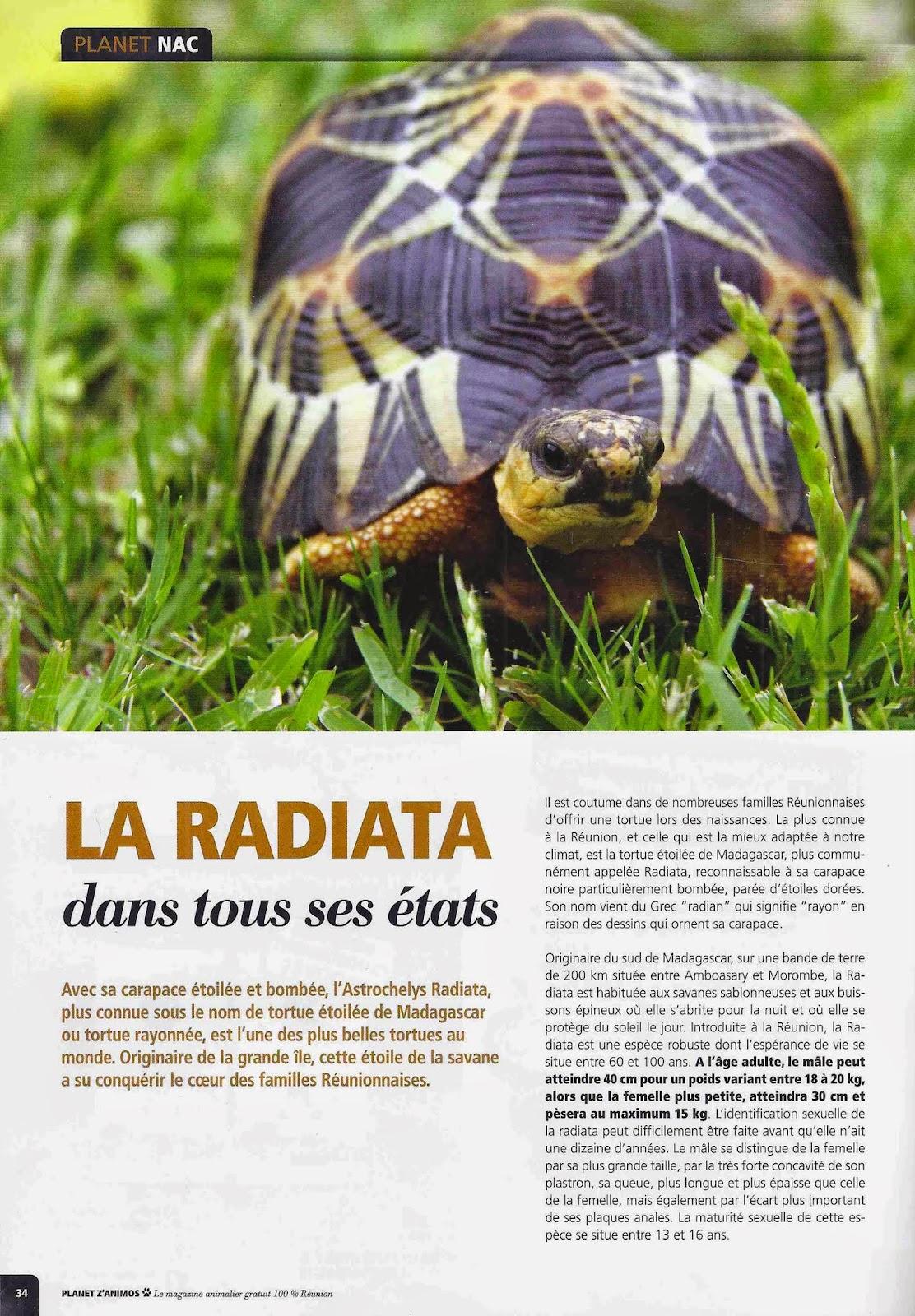 Le ons de choses la tortue radiata for Animaux jardin des plantes