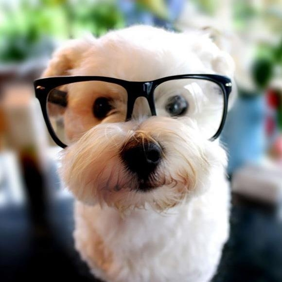 Funny puppy with big glasses