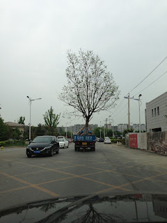 trees in Beijing