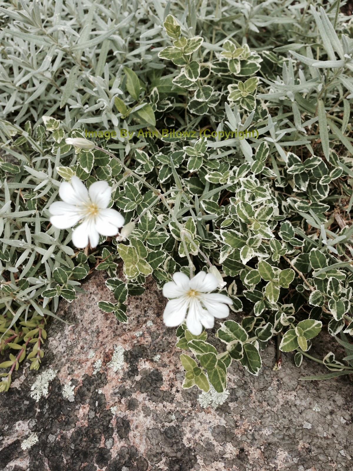 Low maintenance perennials