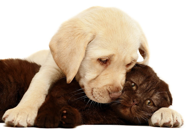 puppy love,puppy hug, black cat