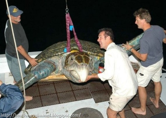 Big turtle.