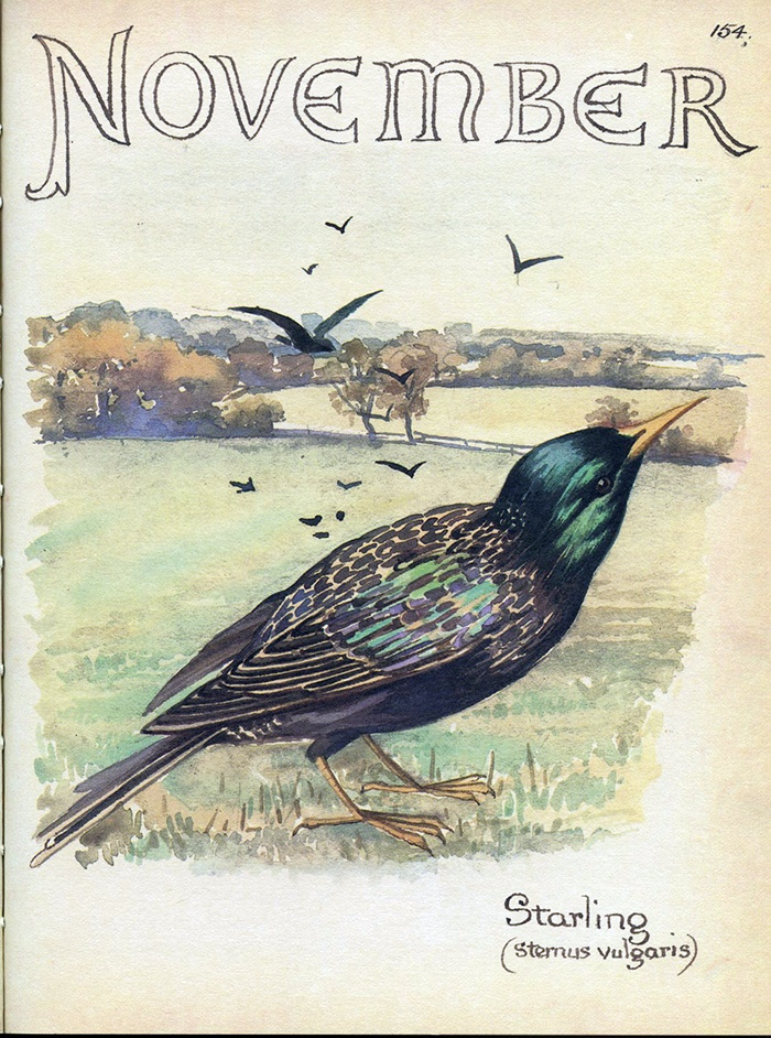 November by Edith Holden