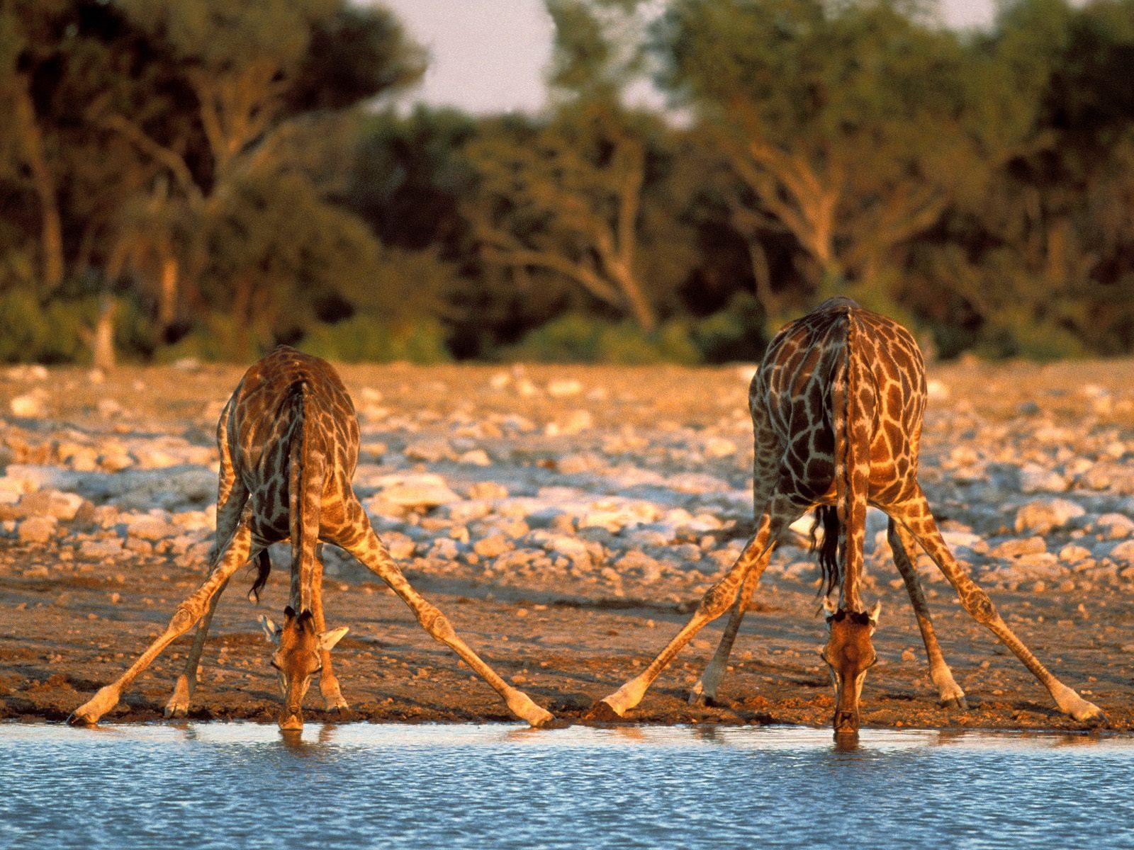 http://1.bp.blogspot.com/-ovZyP4WOxZc/TppKXdoHWVI/AAAAAAAAH48/LiWbpSHeLFY/s1600/kruger-national-park-south-afrika-4.jpg