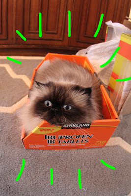 cat in box 01