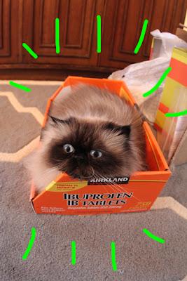 cat in box 01