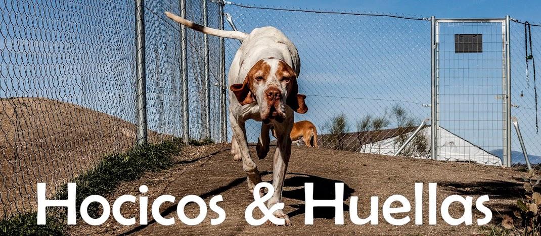 HOCICOS Y HUELLAS