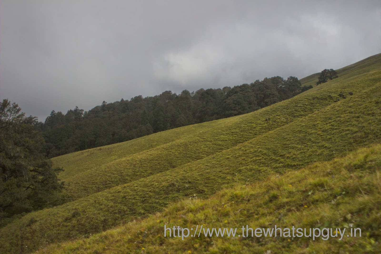 Ali-Bugyal-Meadows-Roopkund-Trek-With-India-Hikes-Day-2
