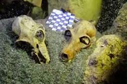 Ditemukan Kuburan Berisi Ratusan Fosil Lemur Raksasa