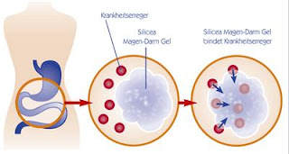 was hilft gegen magen darm virus