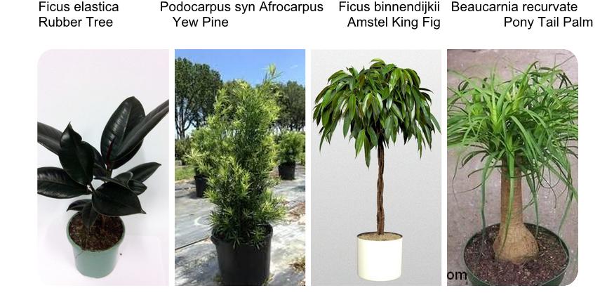 Interiorscaping compendium indoor plant identification - Common indoor plants ...
