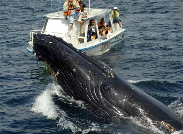 Imagenes de ballenas