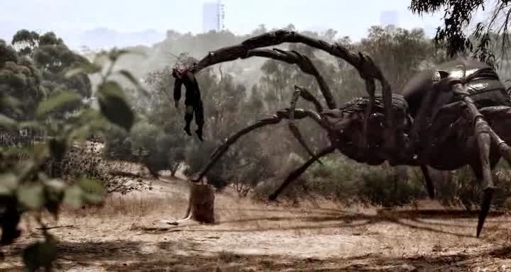 Real life giants spider - photo#12