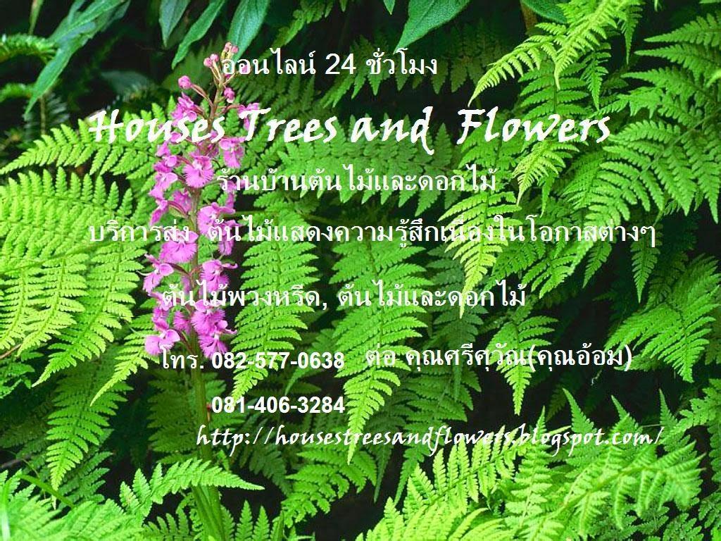 "Houses Trees and flowers ""ร้านบ้านต้นไม้และดอกไม้"""