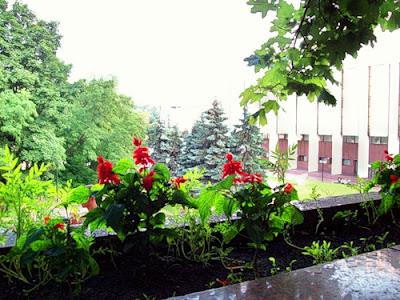 Цветы Владимирской горки