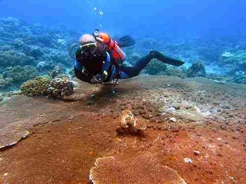 Punta Diwata Reef