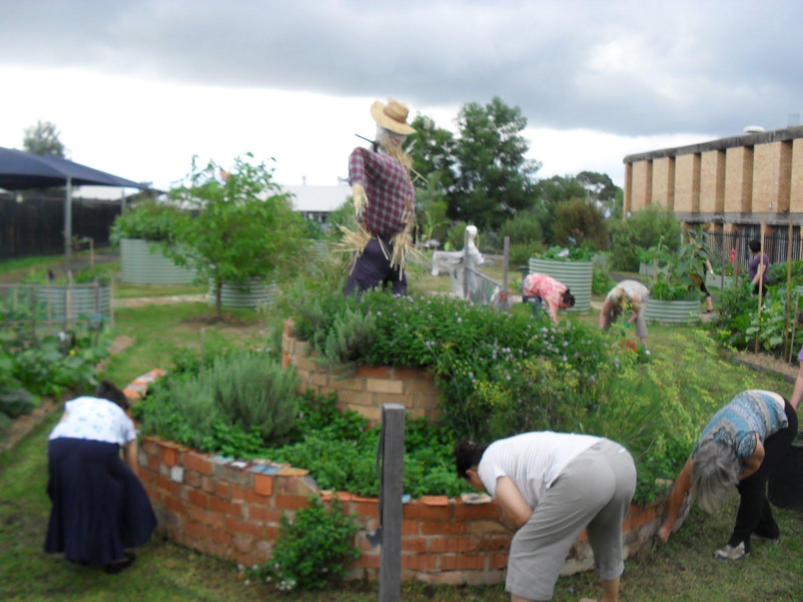 Stephanie Alexander Kitchen Garden Halinda Green Halinda Spp Community Garden March 2011