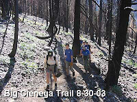 August 30, 2003, San Gabriel Mountains Trailbuilders - Damage from the 2002 Curve Fire on Big Cienega Trail, Crystal Lake, Angeles National Forest