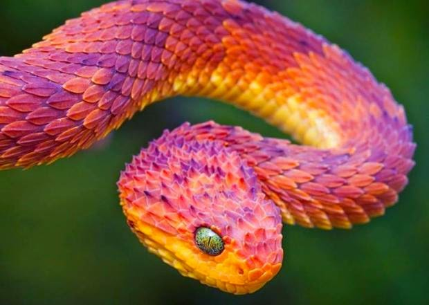 latest photos most colorful animal in the world