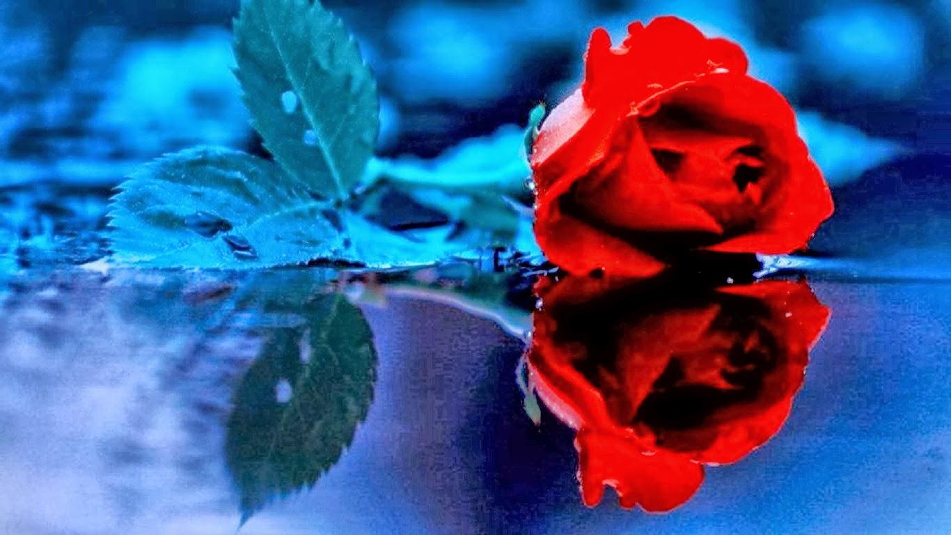 Imagenes De Rosas Que Brillen - Rosas Que Brillan Intensamente Foto de archivo Imagen