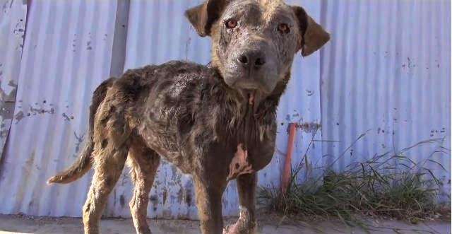 perra callejera es rescatada