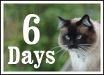 ONLY SIX DAYS until we walk the walk for homeless cats and kittens!