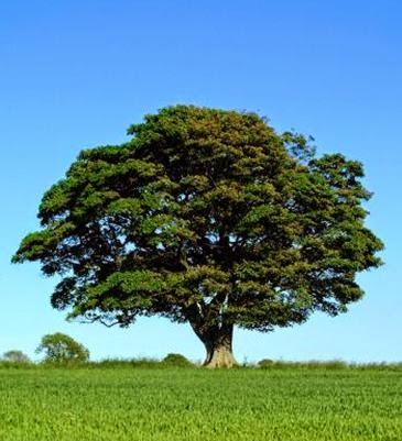 ReteSicomoro - Conoscere per crescere