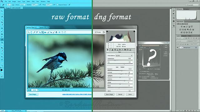 raw ve dng dosya formatları