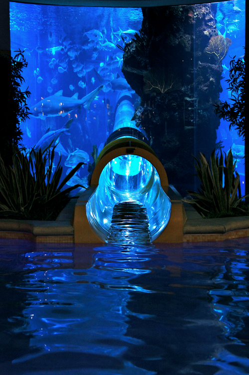 Las Mas Hermosas Fotos De Todo El Mundo as well Avatar No Disneys Animal Kingdom in addition Nitrate Removal A New Filtration Technology further Beautiful Home Aquarium additionally Amazing Beach House Designs Guz Architects. on oscar fish best lighting