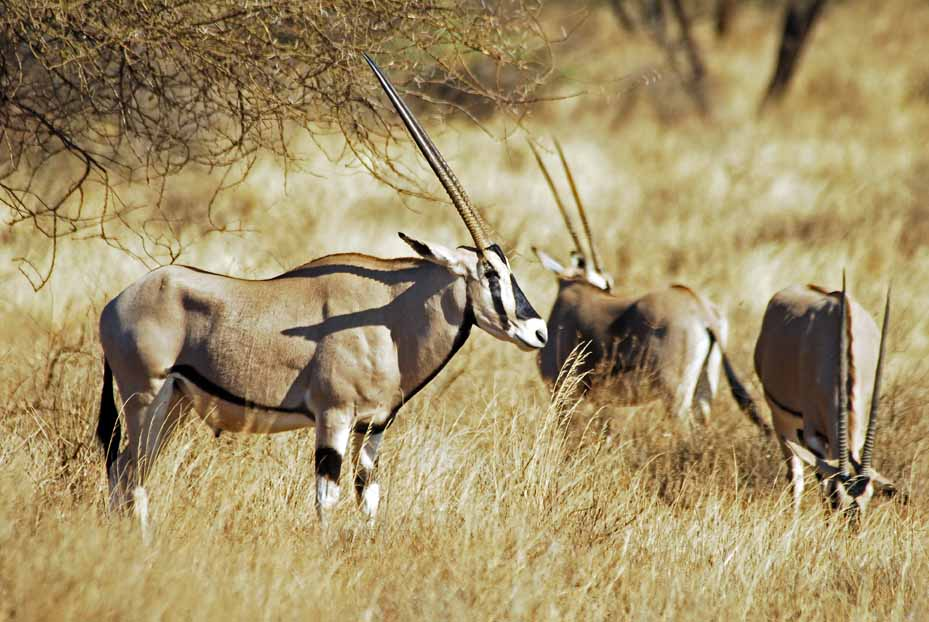 Oryx and Crake  Wikipedia