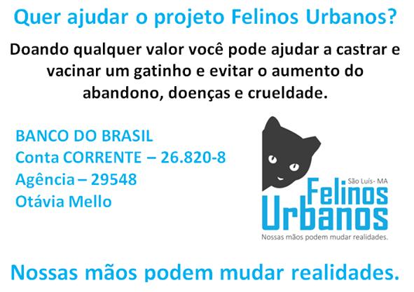 São Luís é uma das unicas capitais do Brasil que não oferece castração gratuita ou a baixo custo.