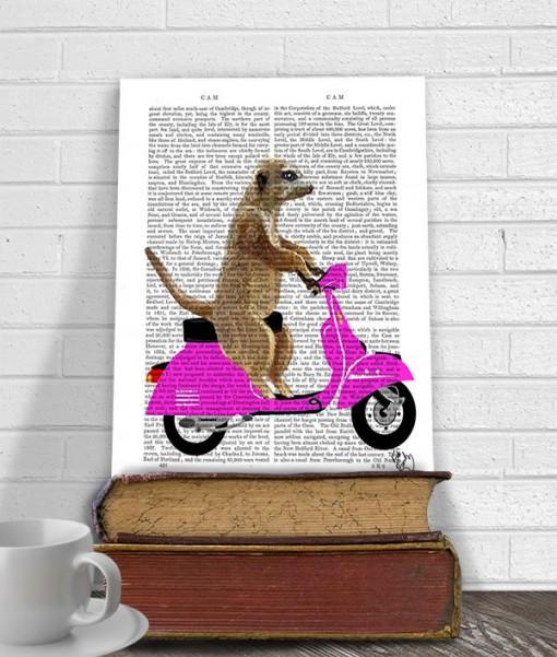 fab funk antiquarian book print meerkat