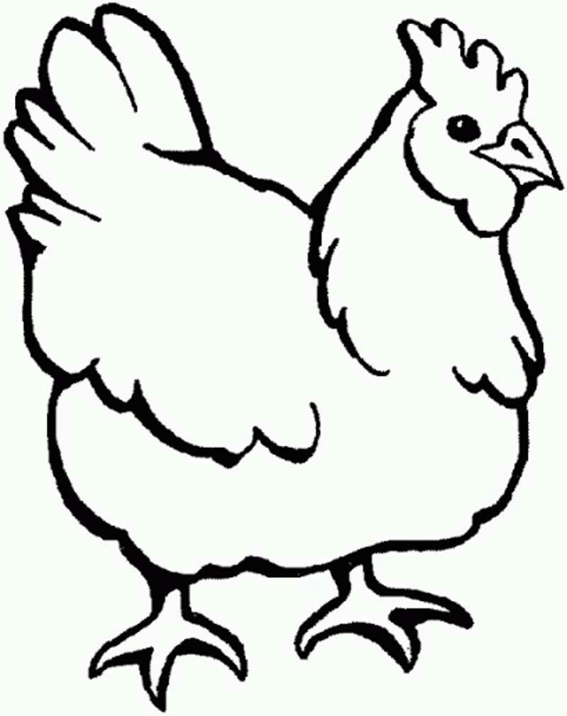 Mewarnai Ayam7