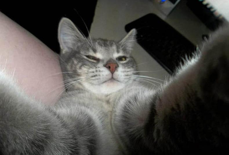 Divertidos gatos se toman sus Selfies más perfecto