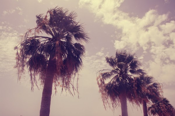 tenerife, uk fashion and beauty blog, palm trees, beach, summer
