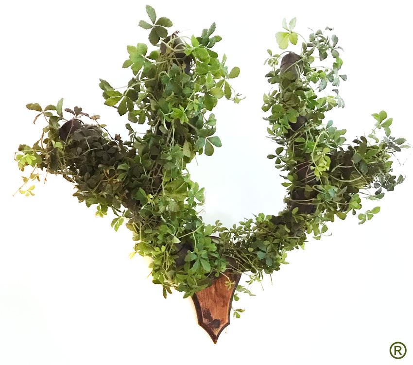 Het Groene Gewei ®