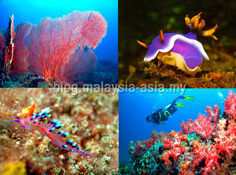 Diving sites in Miri, Sarawak