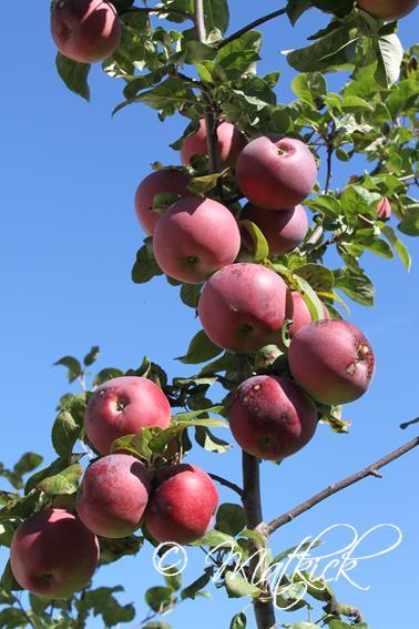 Äppleträd