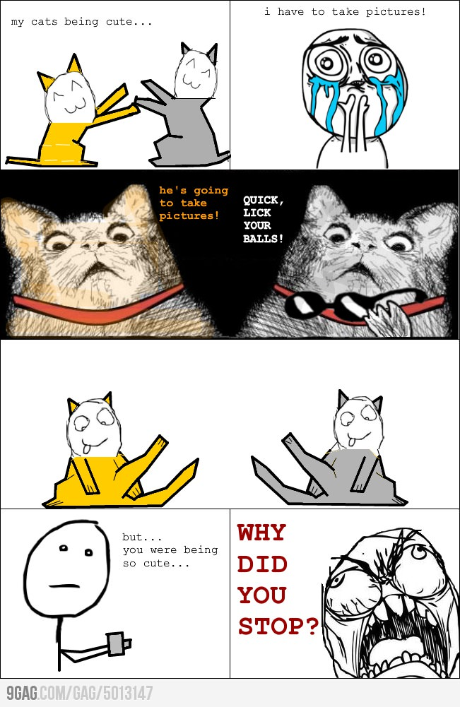 Funny Memes For Jerks : Taking picture of cats funny meme memes and pics