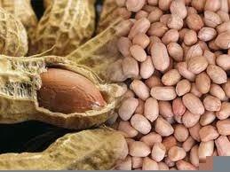 Kacang Tanah Turunkan Kolesterol