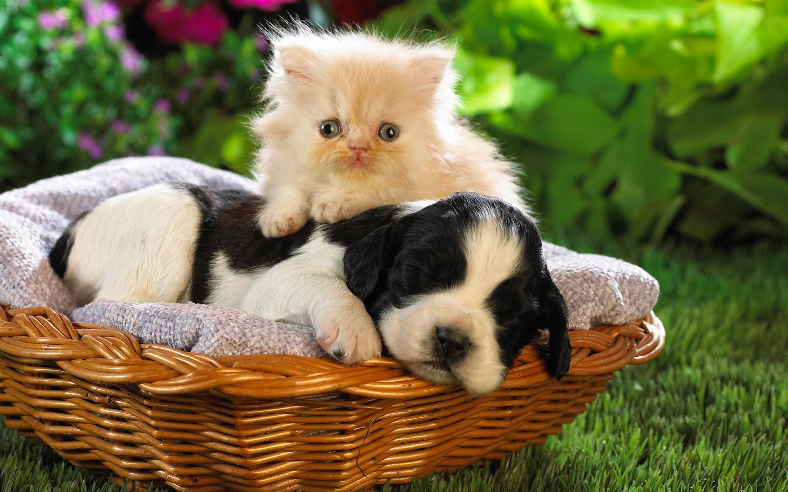 Top Worlds Cutest Animals