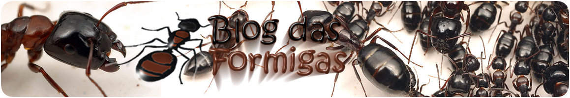 Layout Novo O Blog das Formigas