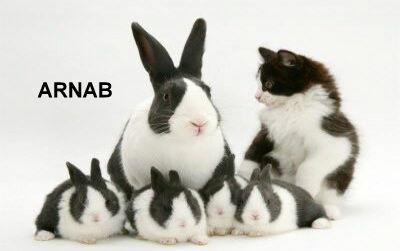 Cara Haiwan Bergerak